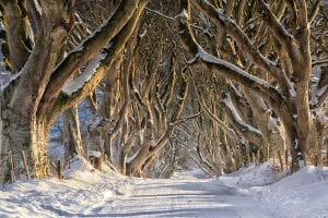 Dark Hedges Winter is Here